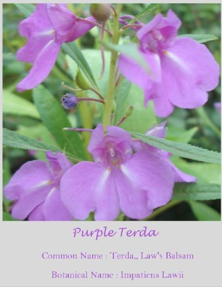Purple21